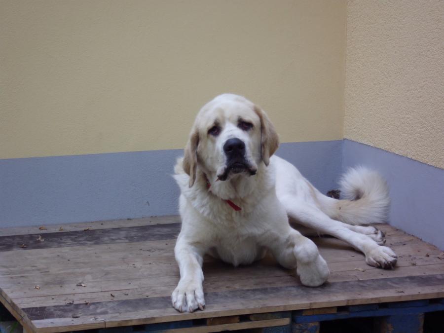 Tierschutzverein Hohenstein Ernstthal Ev Hunde